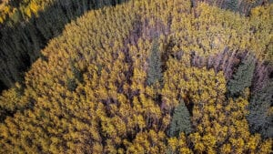 why aspen are amazing drone photo 1
