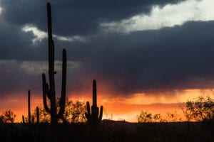 winter camping saguaro cacti photo