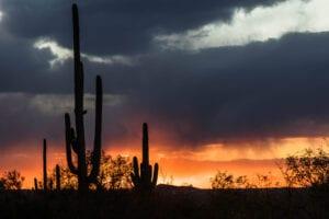 winter camping saguaro cacti photo