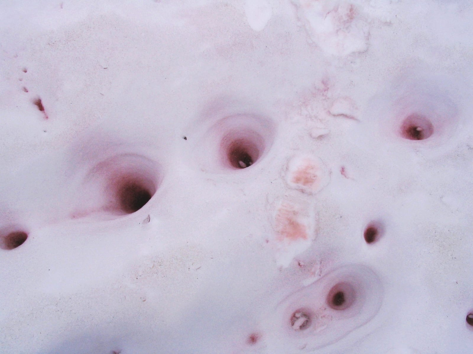 What causes watermelon snow photo 3